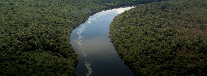 INFOGRÁFICO: A AMAZÔNIA DE HOJE